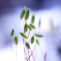 plant life by pqphotography