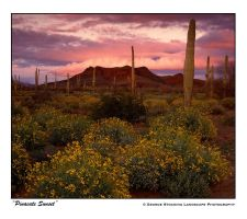"""Pinacate Sunset"" by gwrhino"