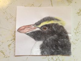 Erect-Crested Penguin by imagineBeyondReality