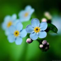Forget me not by knowhopeinme