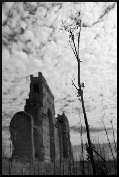 grows by the ruins by flx2000