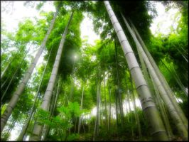 Bamboo Canopy by welshdragon