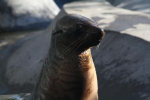 Seal IV by FreeakStock