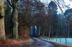 While the spring walk is still far away by jchanders