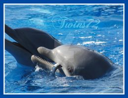 Dolphin 3 by Twins72