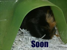 SOON by MadForHatters