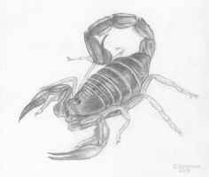 Scorpion by crazy13
