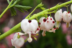 Bloody Bleeding Hearts by KeswickPinhead