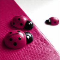 pink ladybugs by quicksilverq