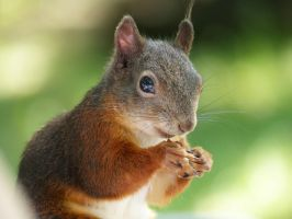 Squirrel 186 by Cundrie-la-Surziere