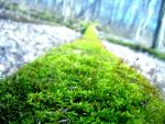 Mossy log Macro by OCAnoveD