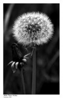 Seeds by vickibruce