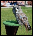 Great Grey Owl by Nataly1st