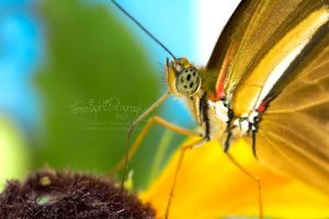 Butterfly Straw by FreeSpiritFotography