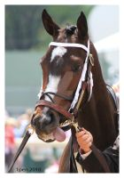 Rachel Alexandra by 1pen