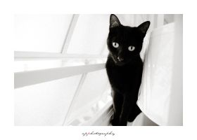Curious by ap-photography