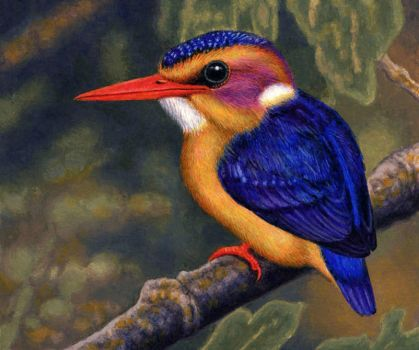 African Pygmy Kingfisher by WillemSvdMerwe