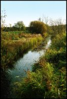 BG Brook by Eirian-stock