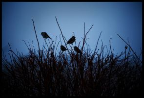 Four Sparrows by HeresyPreacher