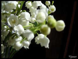 muguet by sofille