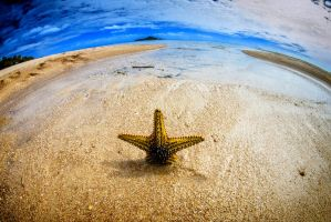 Starfish by Questavia