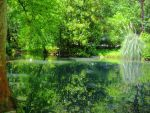 Lake in the Prince of Oldenburg's Park by liquid--skies