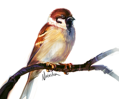 Tree Sparrow by Daguu