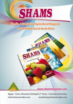 shams magazine adv. by bakbakgirl