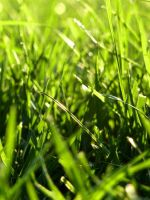 Enlightened Grass by AtomicBrownie