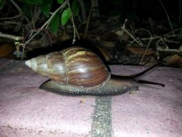 Snail 24Oct2014 2 by RiverKpocc