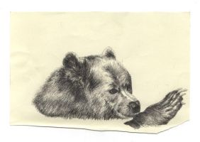 grizzly bear by drawingsbycharlotte