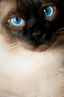 blue eyes by AnJail