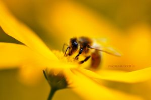 how to bee yellow by papayasweet