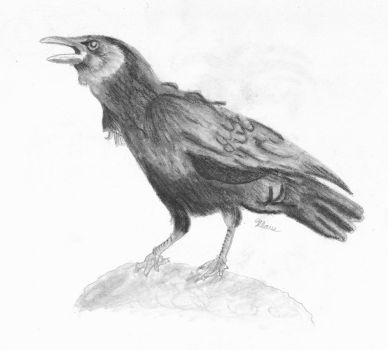 Crow by AttackFly