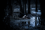 The Drowning within the Forest by beyondimpression
