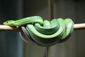 Green Snake by KTsPhotography