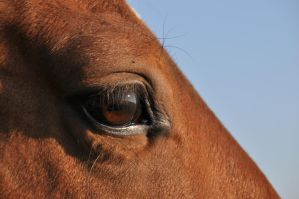 Horse Eye Stock 1 by LuDa-Stock