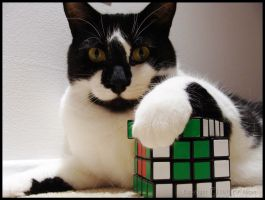 Special Rubik Fan by paa34