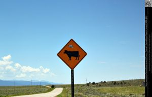 Alien Abduction Cattle Crossing Zone by DamselStock