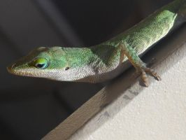 Green Anole 1 by Angelwolf778