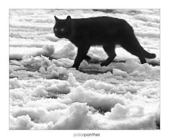 polarpanther by shtrumf