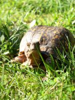 Turtle in the Grass by iaml0st815