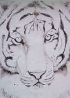 India Ink Tiger by Tsaark