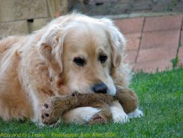 Golden Retriever and his Teddy by Mowbuss