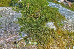 It's Moss On A Rock by MoonShadowPhoto