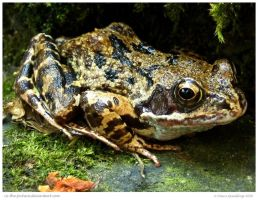 Froggy Close Up by In-the-picture