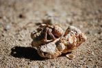 Hermit Crab by CompassLogic