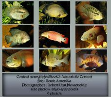 Contest fish pack 3 by AzurylipfesStock
