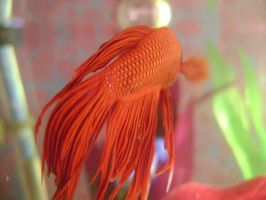 red siamese fighting fish 3 by EmzazasStock