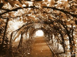 Sepia Archway by paganchild1974